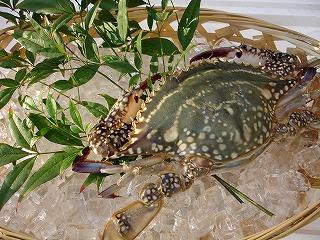 ワラスボ シャコ 等の有明海の珍味をお取り寄せ